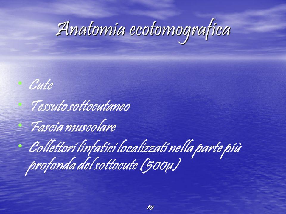 Anatomia ecotomografica