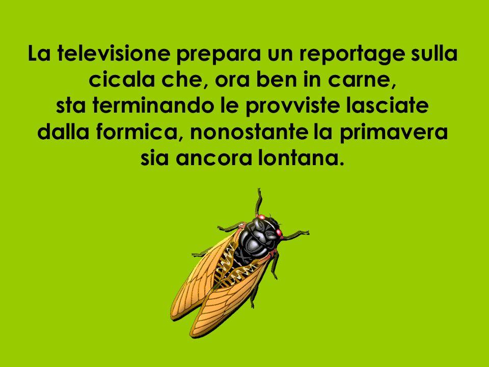 La televisione prepara un reportage sulla cicala che, ora ben in carne, sta terminando le provviste lasciate dalla formica, nonostante la primavera sia ancora lontana.