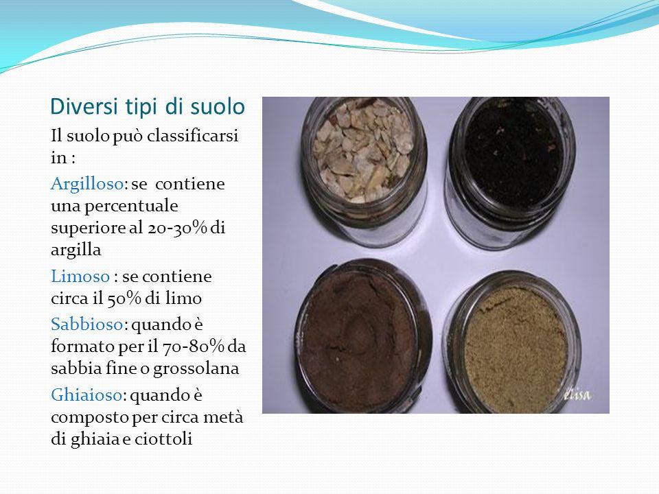 Diversi tipi di suolo Il suolo può classificarsi in :