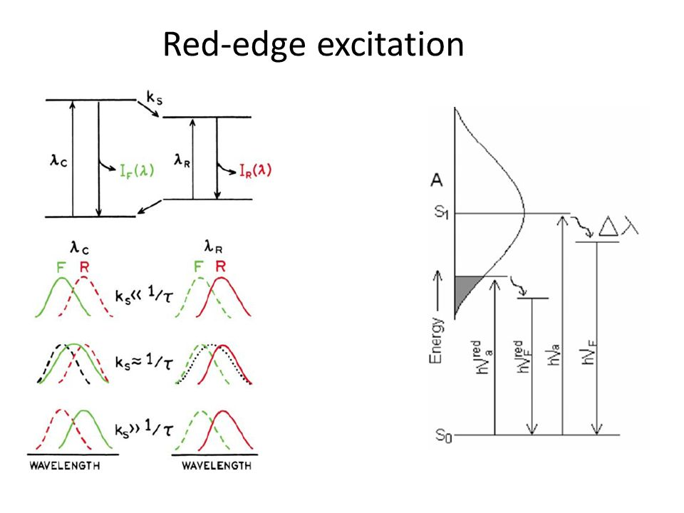 Red-edge excitation