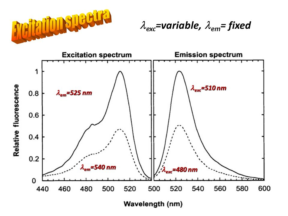 Excitation spectra exc=variable, em= fixed exc=510 nm em=525 nm