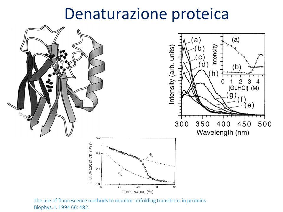 Denaturazione proteica