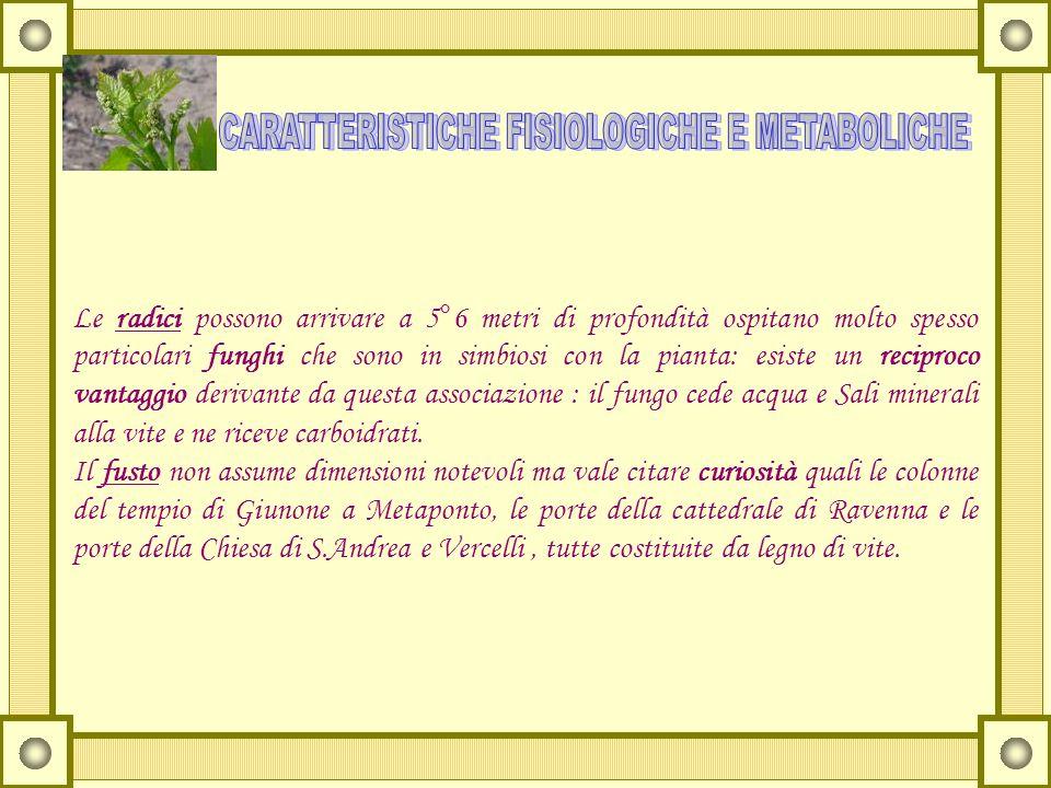 CARATTERISTICHE FISIOLOGICHE E METABOLICHE