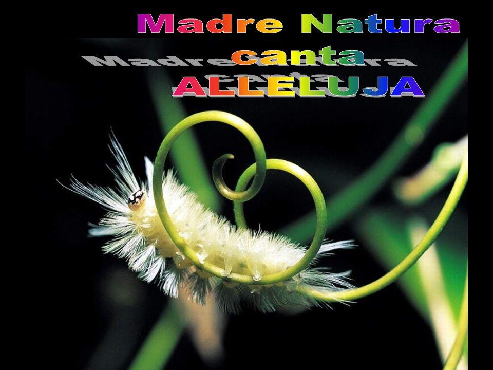 Madre Natura canta ALLELUJA