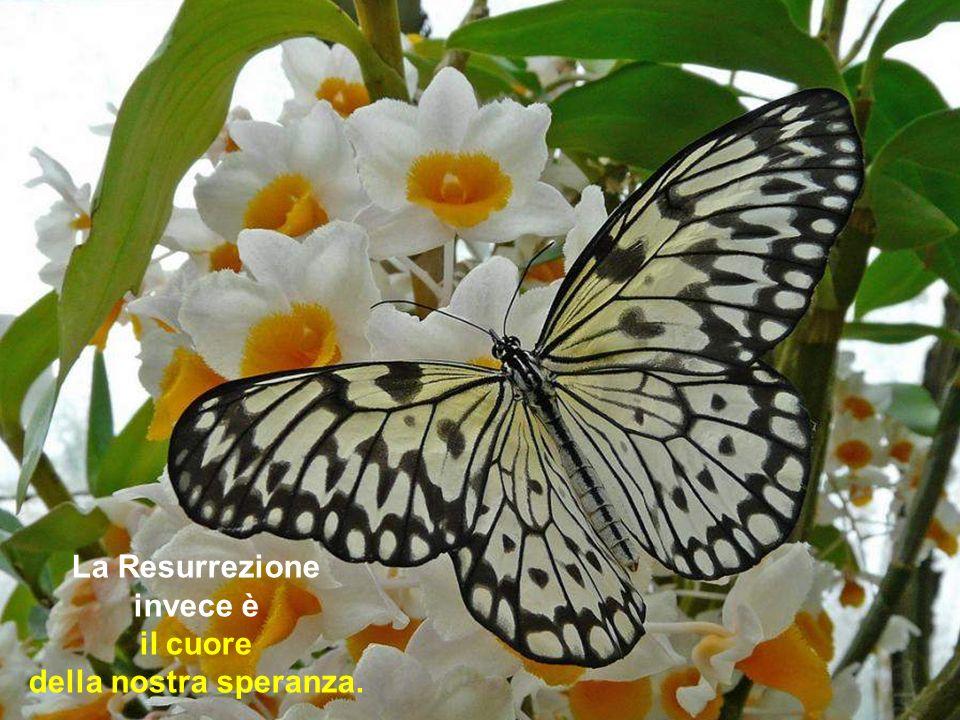 La Resurrezione invece è il cuore della nostra speranza.