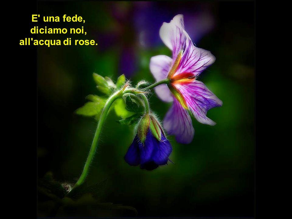 E una fede, diciamo noi, all acqua di rose.