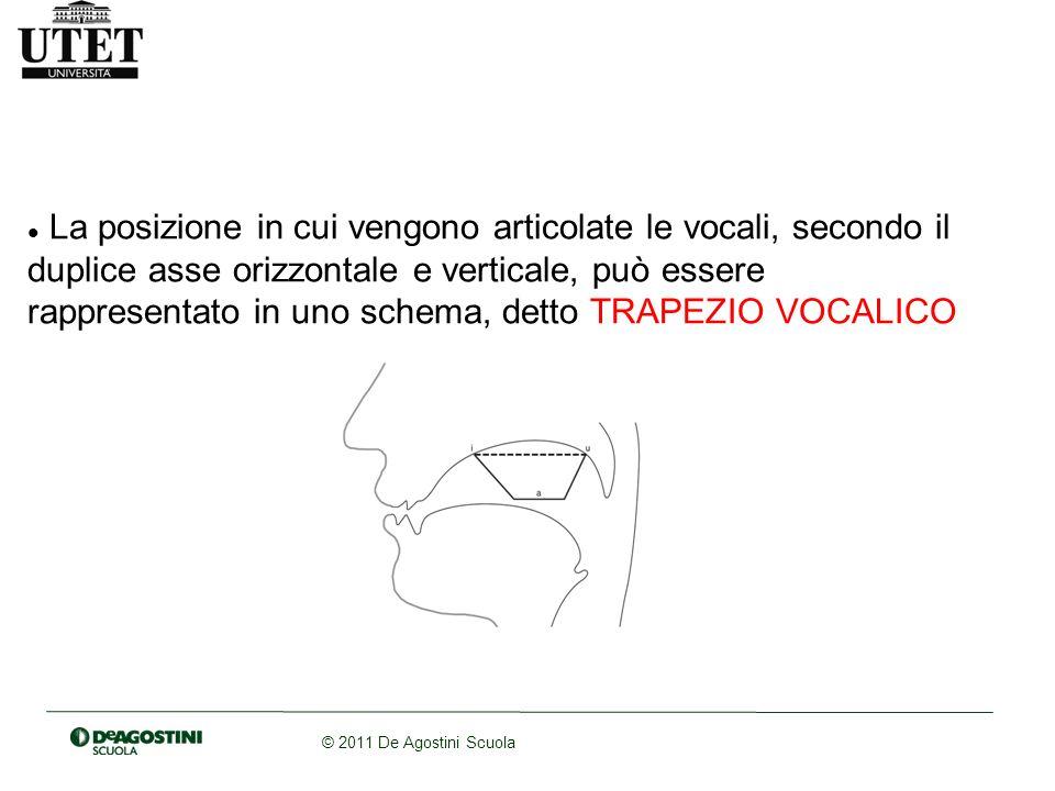 La posizione in cui vengono articolate le vocali, secondo il duplice asse orizzontale e verticale, può essere rappresentato in uno schema, detto TRAPEZIO VOCALICO