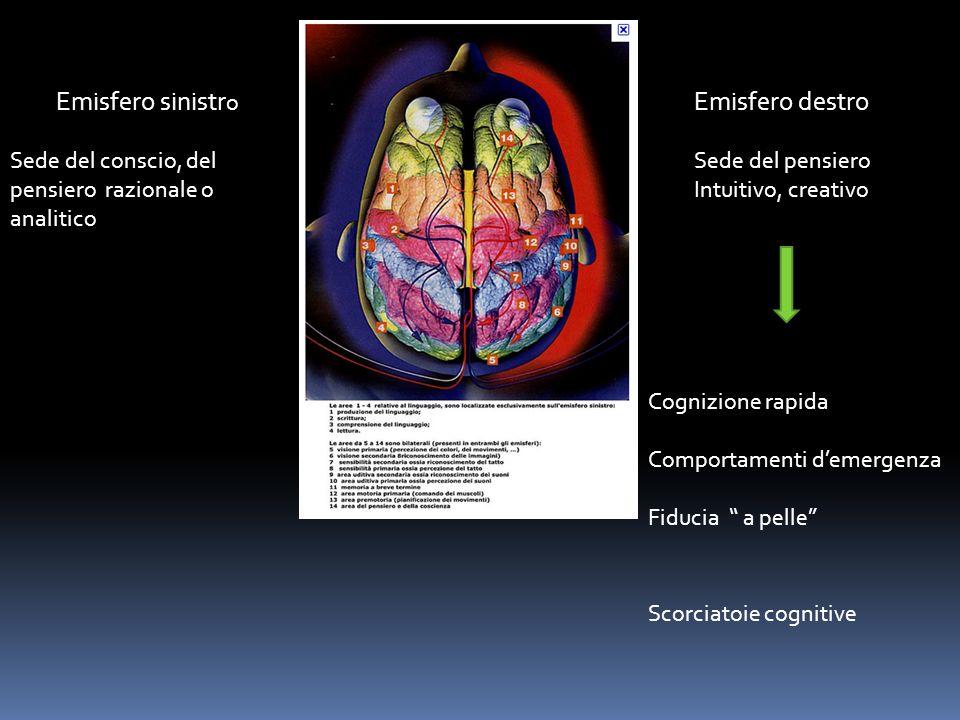 Emisfero sinistro Emisfero destro