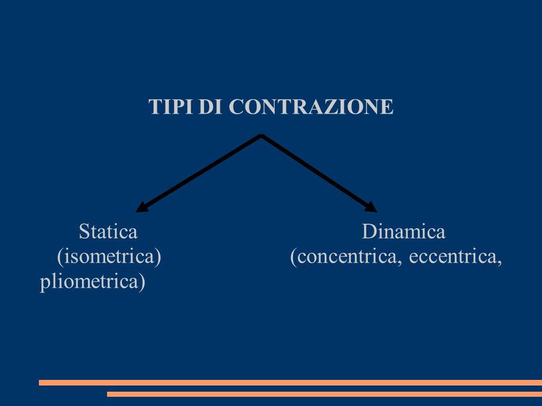 TIPI DI CONTRAZIONE Statica Dinamica.