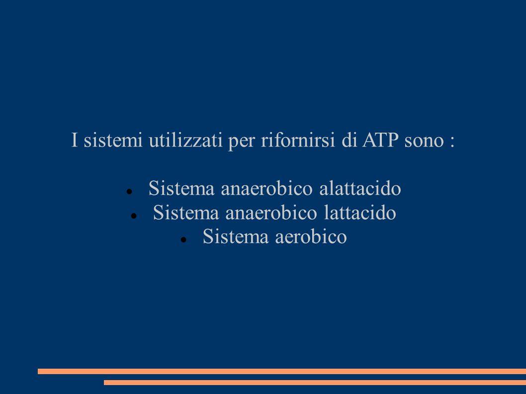 I sistemi utilizzati per rifornirsi di ATP sono :