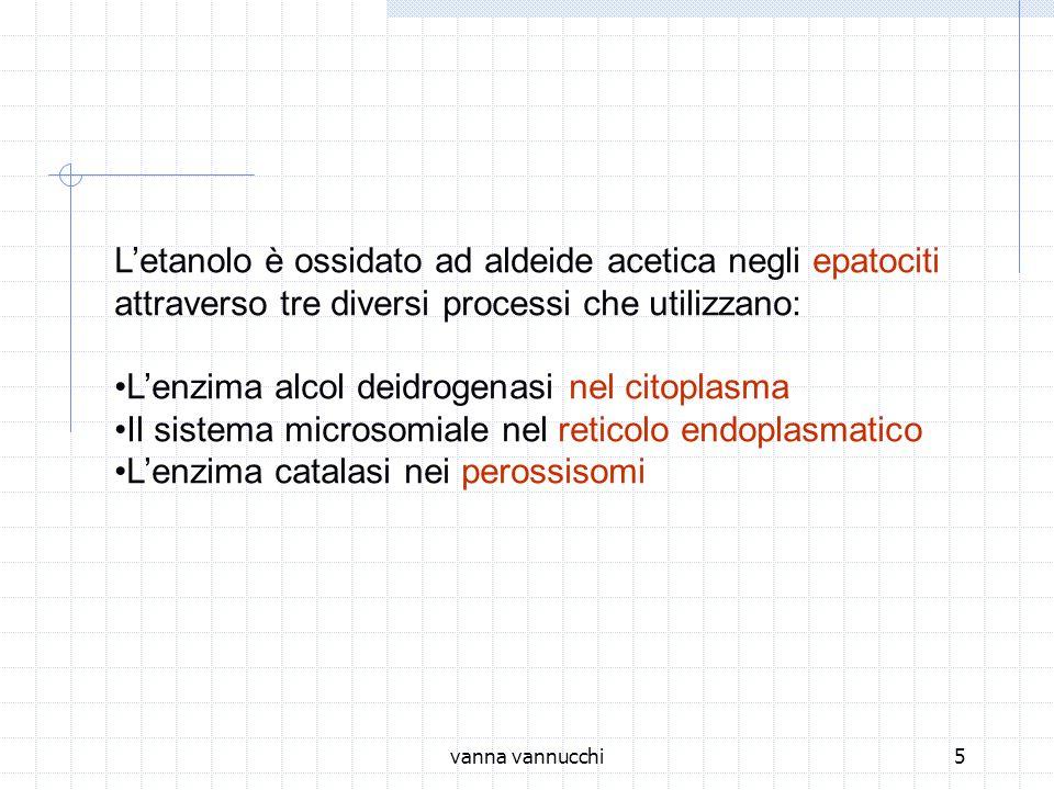 L'etanolo è ossidato ad aldeide acetica negli epatociti