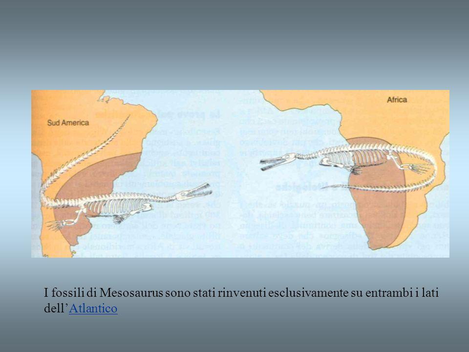 I fossili di Mesosaurus sono stati rinvenuti esclusivamente su entrambi i lati dell'Atlantico