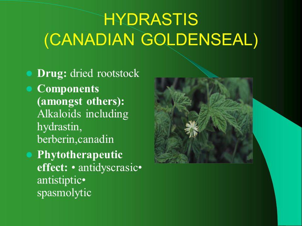 HYDRASTIS (CANADIAN GOLDENSEAL)