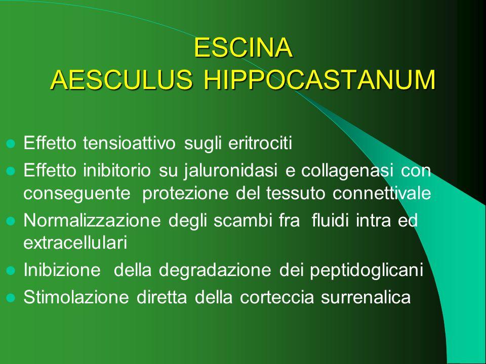 ESCINA AESCULUS HIPPOCASTANUM