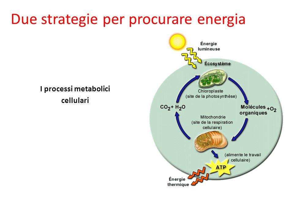 Due strategie per procurare energia