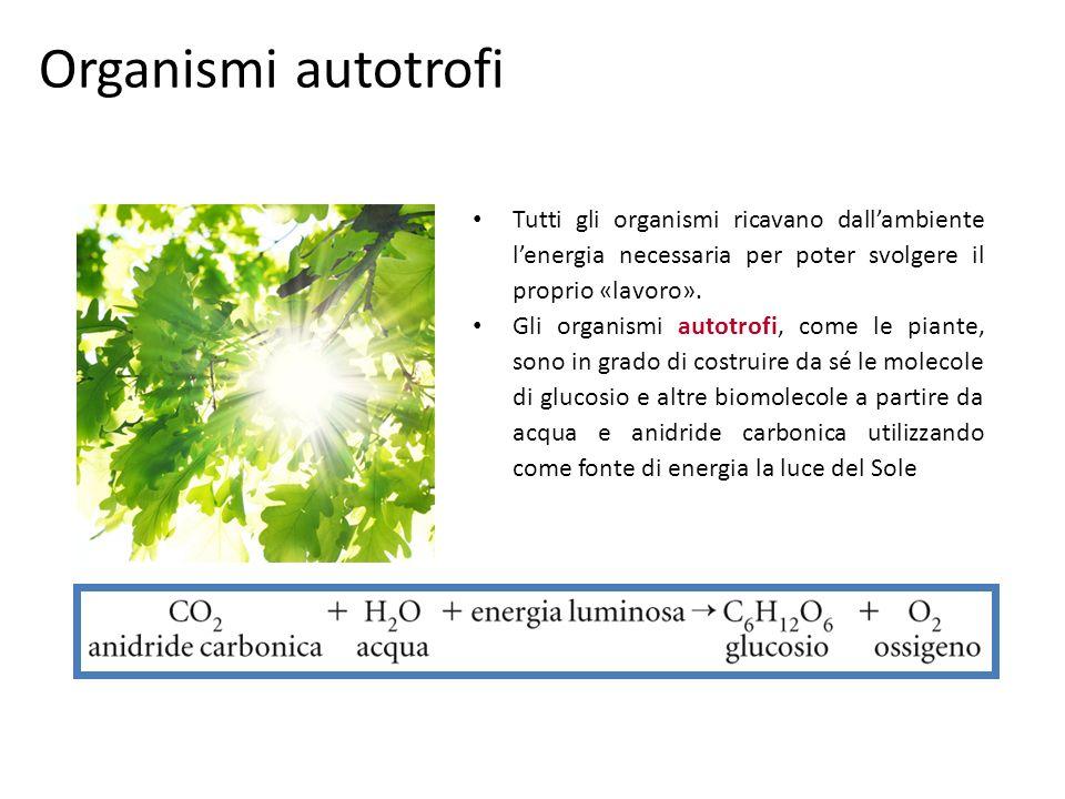Organismi autotrofi Tutti gli organismi ricavano dall'ambiente l'energia necessaria per poter svolgere il proprio «lavoro».