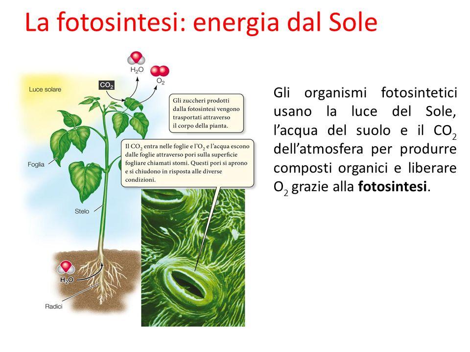 La fotosintesi: energia dal Sole