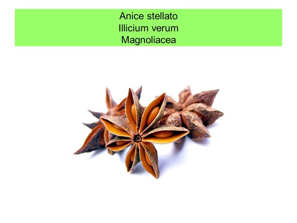 Anice stellato Illicium verum Magnoliacea