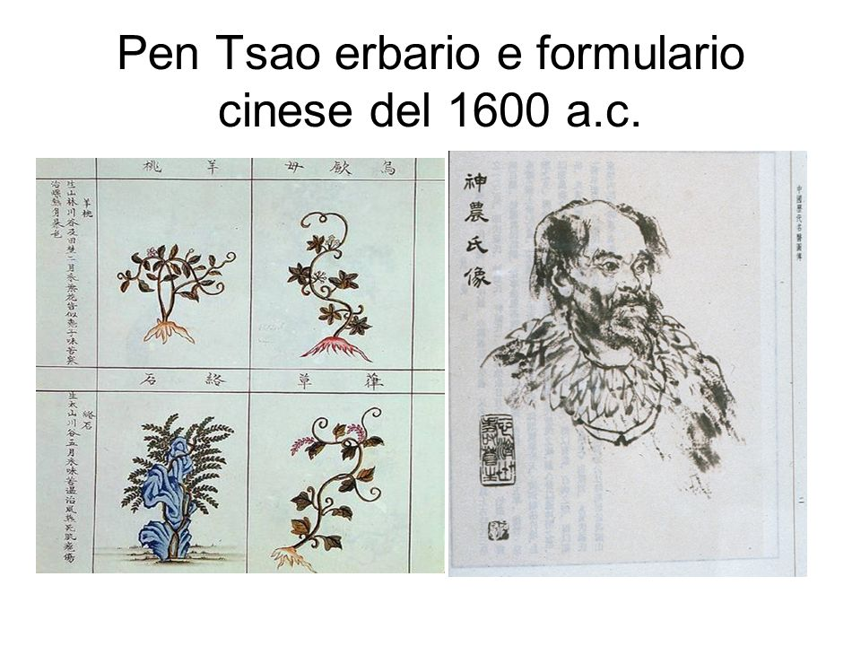 Pen Tsao erbario e formulario cinese del 1600 a.c.