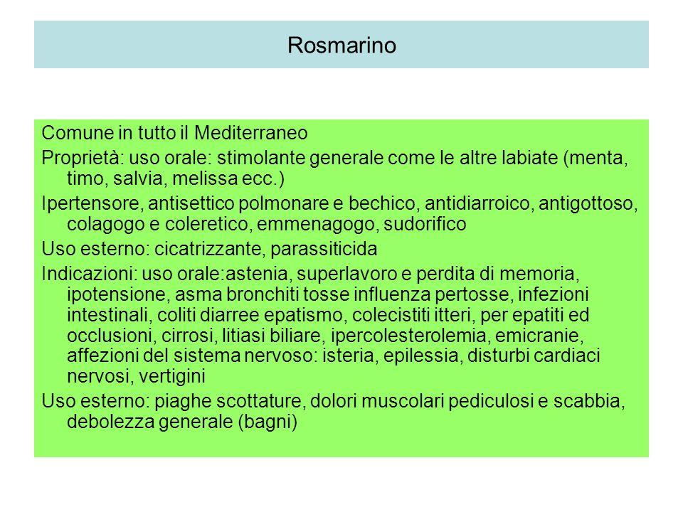 Rosmarino Comune in tutto il Mediterraneo