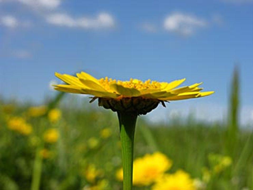 Ma so , mio Signore, che il fiore nasce solo alla fine di un lungo inverno in cui la morte ha infierito.