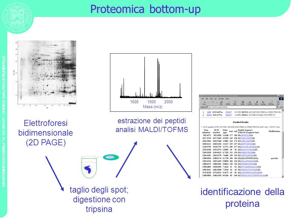 Proteomica bottom-up identificazione della proteina