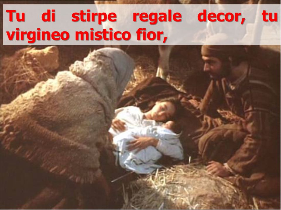 Tu di stirpe regale decor, tu virgineo mistico fior,