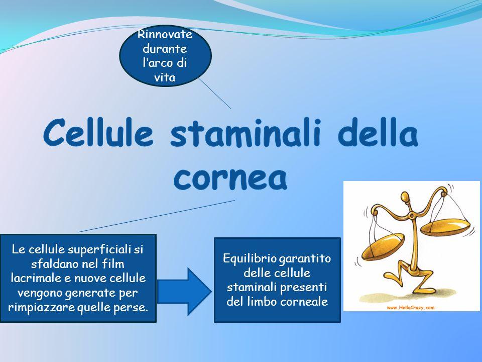 Cellule staminali della cornea