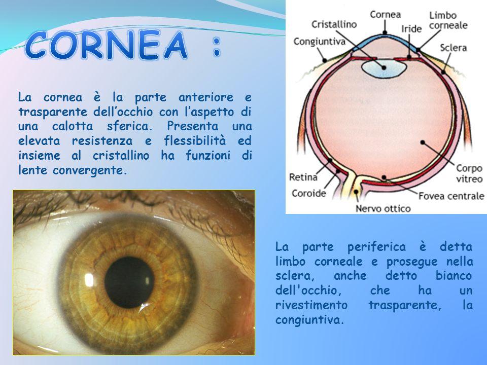 CORNEA :