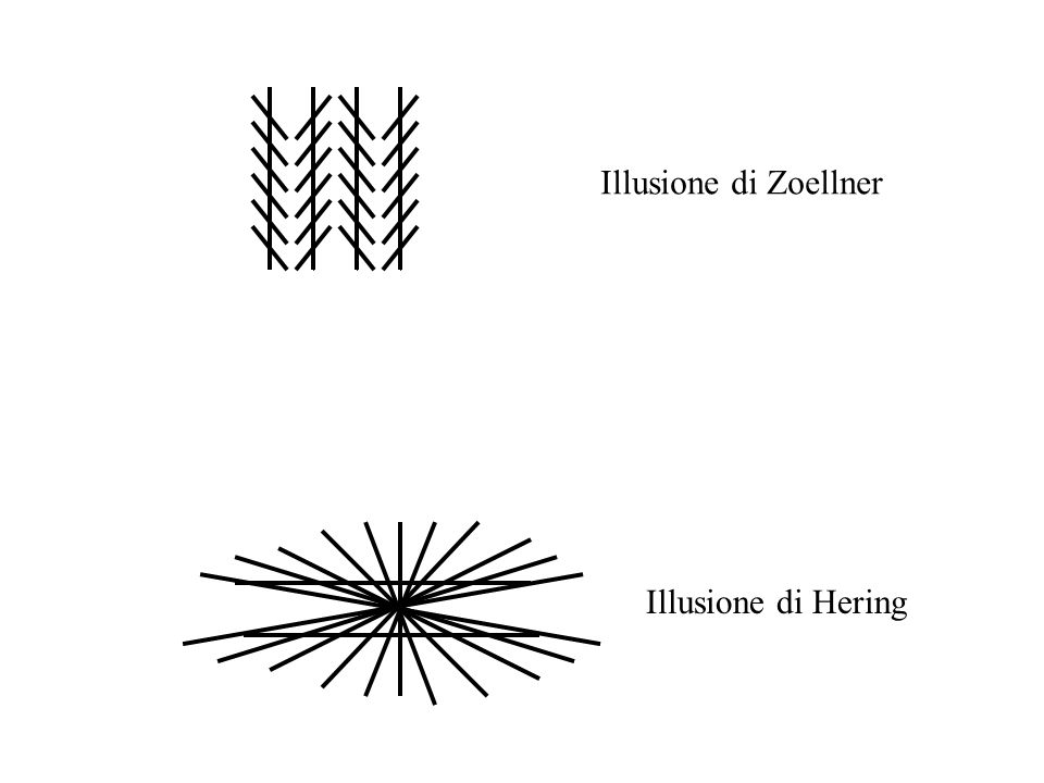 Illusione di Zoellner Illusione di Hering