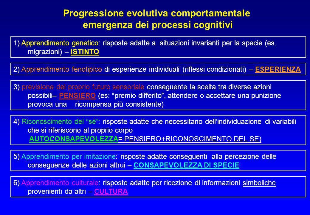 Progressione evolutiva comportamentale