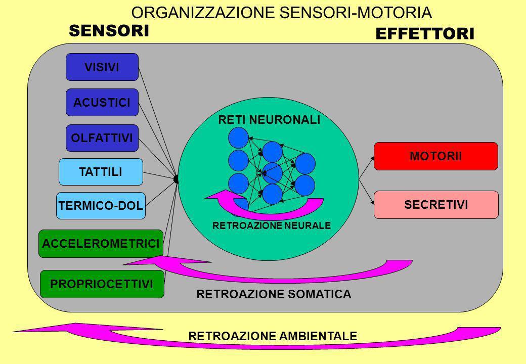 ORGANIZZAZIONE SENSORI-MOTORIA SENSORI EFFETTORI