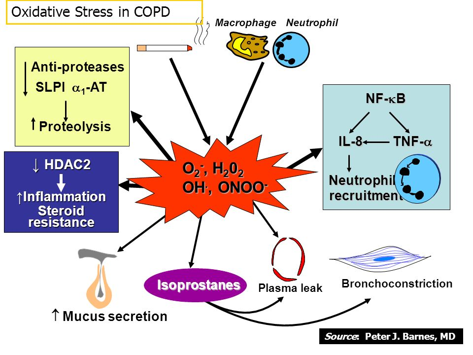 ↓ HDAC2 O2-, H202 OH., ONOO- Oxidative Stress in COPD Anti-proteases