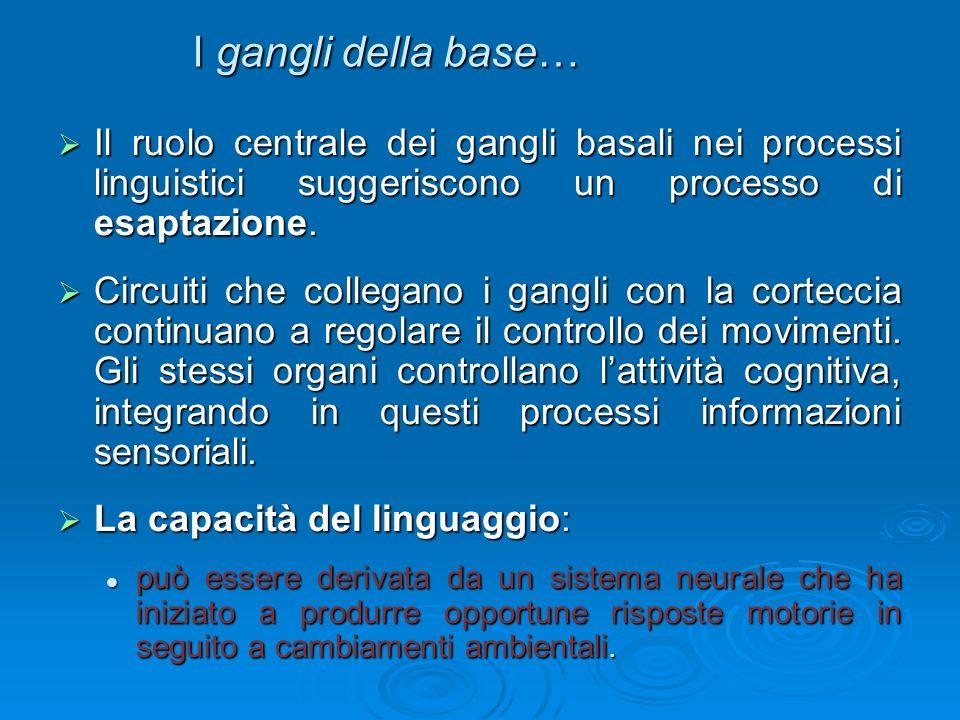 I gangli della base…Il ruolo centrale dei gangli basali nei processi linguistici suggeriscono un processo di esaptazione.