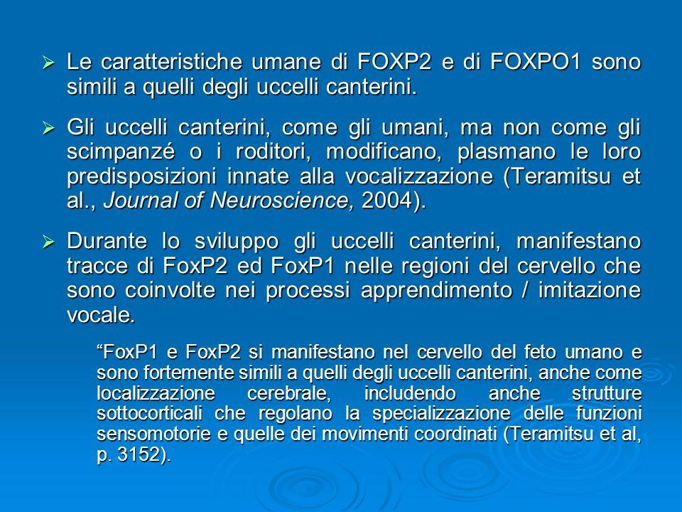 Le caratteristiche umane di FOXP2 e di FOXPO1 sono simili a quelli degli uccelli canterini.