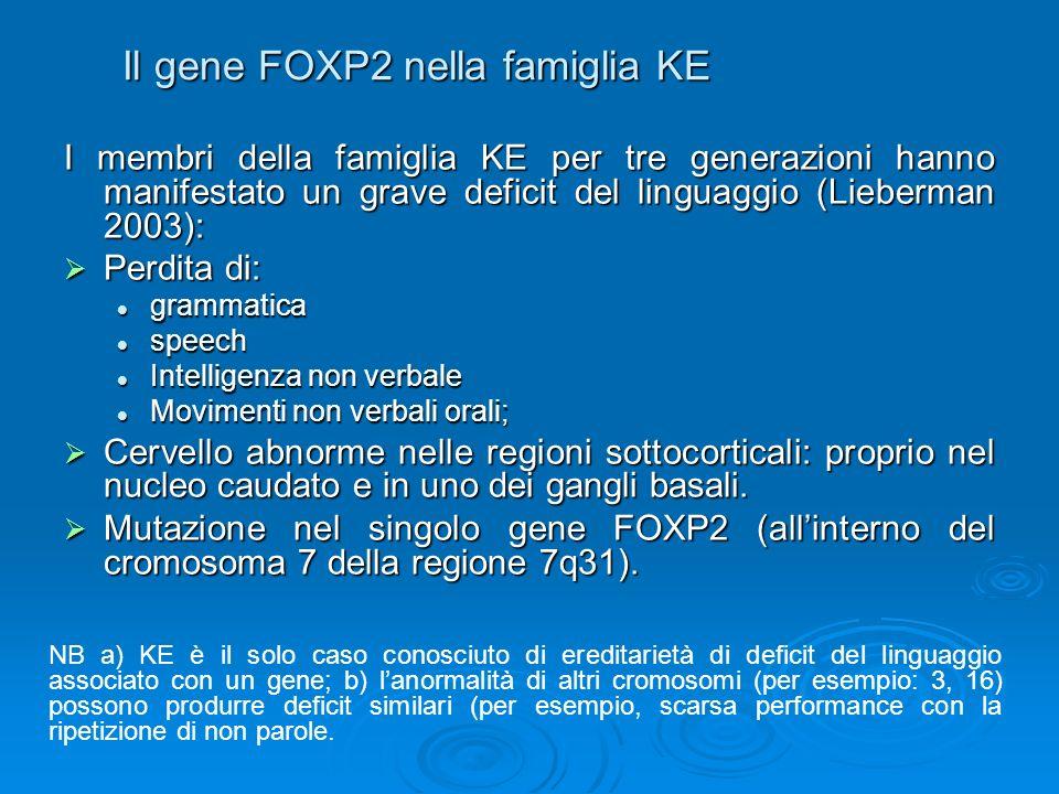 Il gene FOXP2 nella famiglia KE
