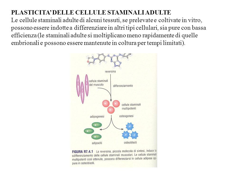 PLASTICITA' DELLE CELLULE STAMINALI ADULTE
