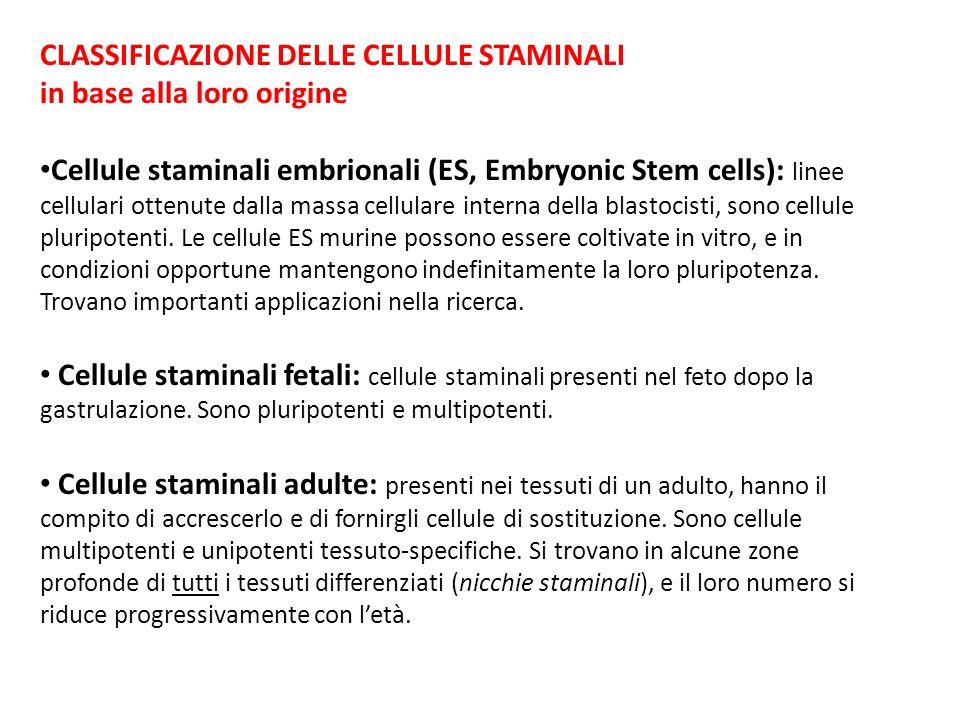 CLASSIFICAZIONE DELLE CELLULE STAMINALI