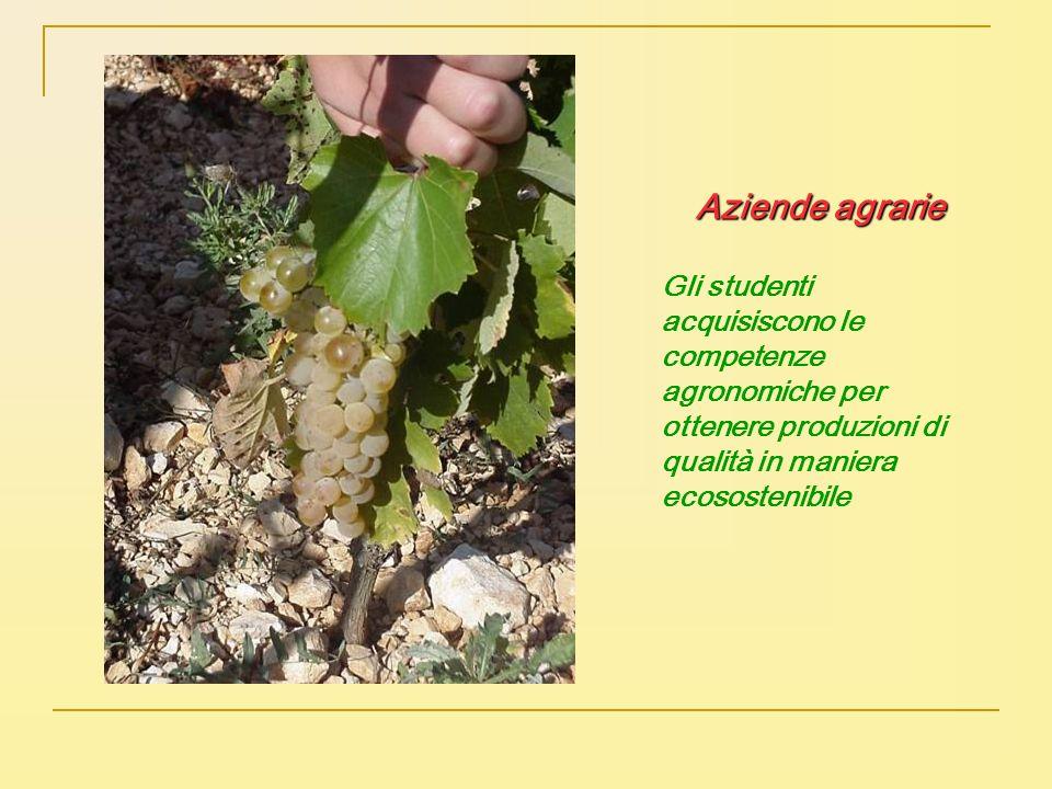 Aziende agrarie Gli studenti acquisiscono le competenze agronomiche per ottenere produzioni di qualità in maniera ecosostenibile.
