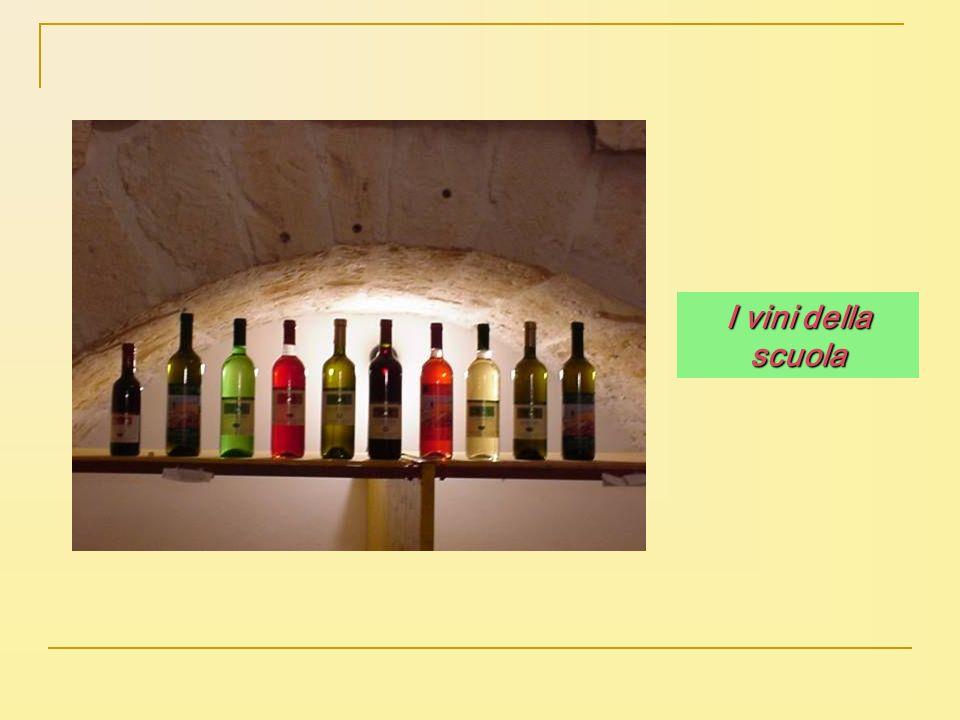 I vini della scuola