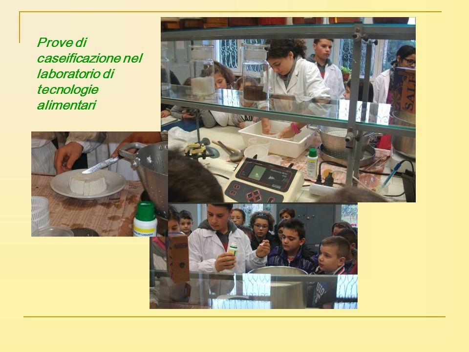 Prove di caseificazione nel laboratorio di tecnologie alimentari