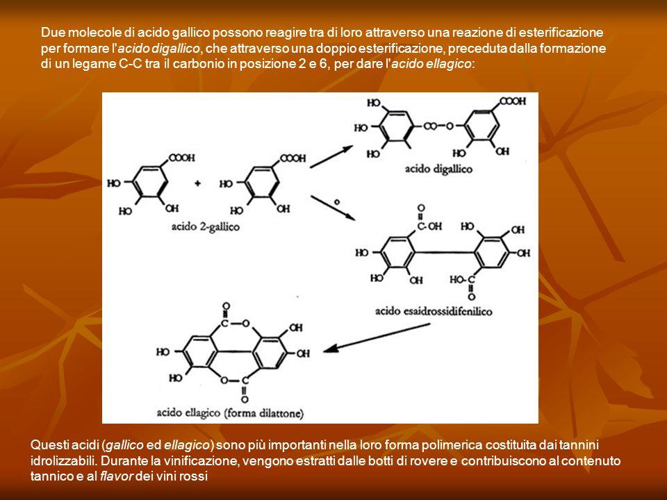 Due molecole di acido gallico possono reagire tra di loro attraverso una reazione di esterificazione per formare l acido digallico, che attraverso una doppio esterificazione, preceduta dalla formazione di un legame C-C tra il carbonio in posizione 2 e 6, per dare l acido ellagico: