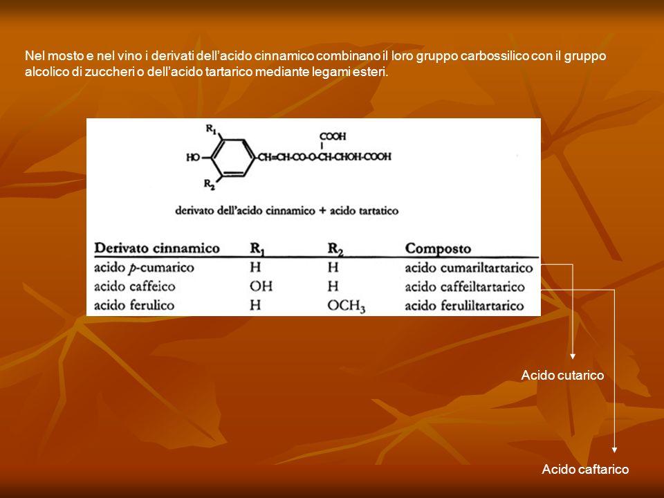 Nel mosto e nel vino i derivati dell'acido cinnamico combinano il loro gruppo carbossilico con il gruppo alcolico di zuccheri o dell'acido tartarico mediante legami esteri.