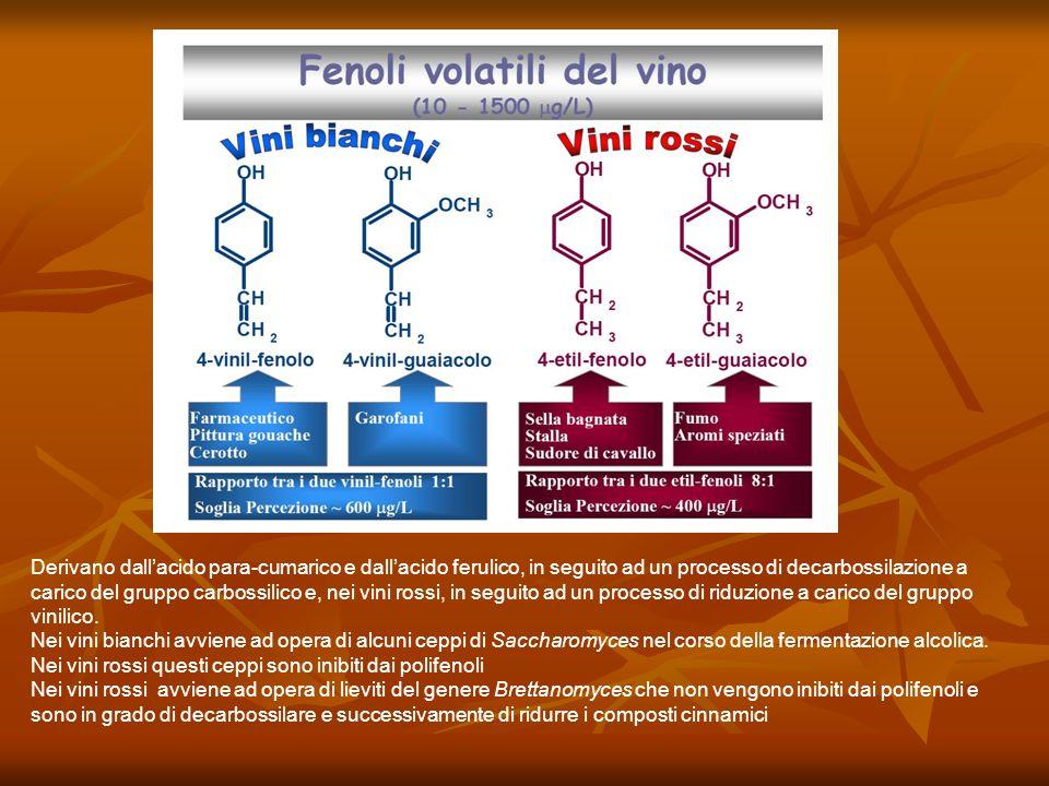 Derivano dall'acido para-cumarico e dall'acido ferulico, in seguito ad un processo di decarbossilazione a carico del gruppo carbossilico e, nei vini rossi, in seguito ad un processo di riduzione a carico del gruppo vinilico.