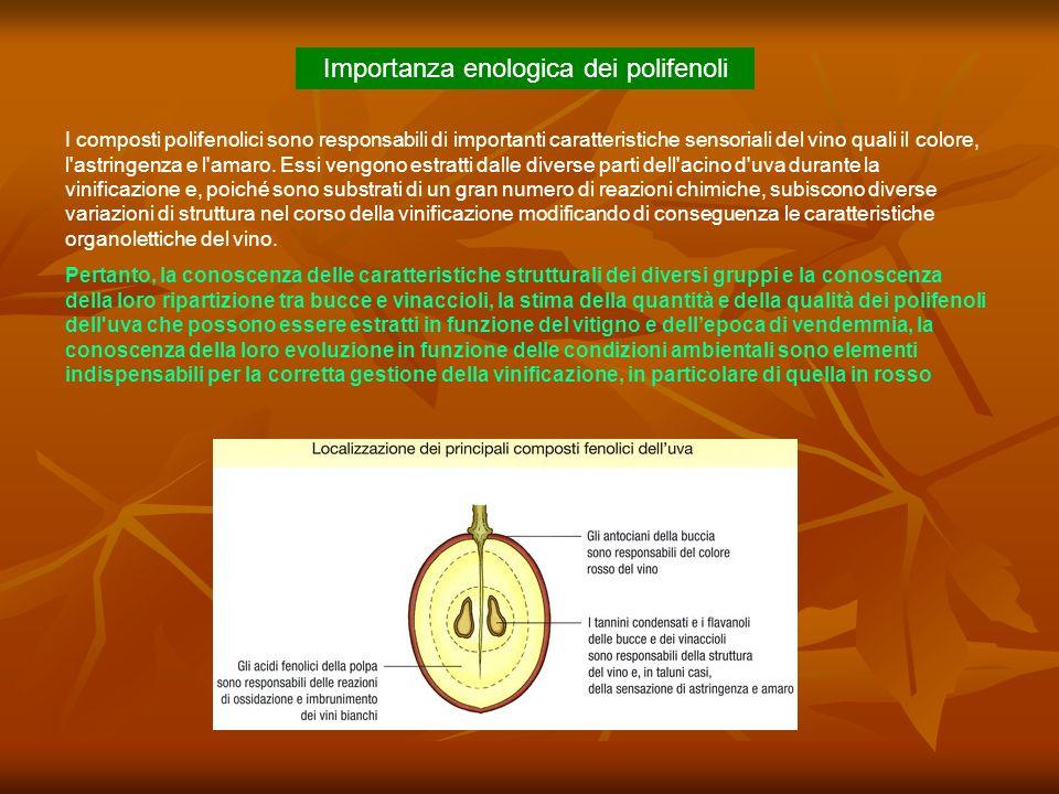 Importanza enologica dei polifenoli