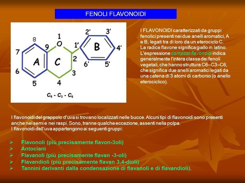 FENOLI FLAVONOIDI Flavonoli (più precisamente flavon-3oli) Antociani