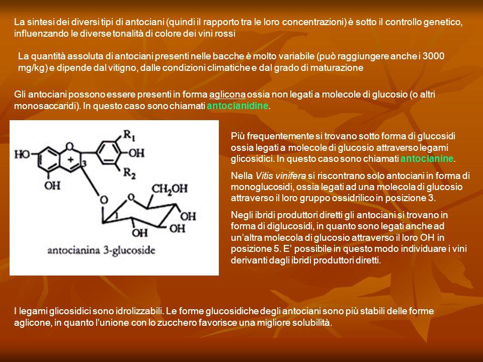 La sintesi dei diversi tipi di antociani (quindi il rapporto tra le loro concentrazioni) è sotto il controllo genetico, influenzando le diverse tonalità di colore dei vini rossi