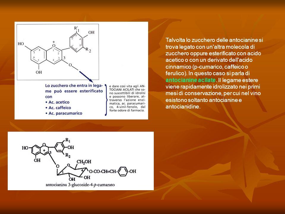 Talvolta lo zucchero delle antocianine si trova legato con un altra molecola di zucchero oppure esterificato con acido acetico o con un derivato dell acido cinnamico (p-cumarico, caffeico o ferulico).