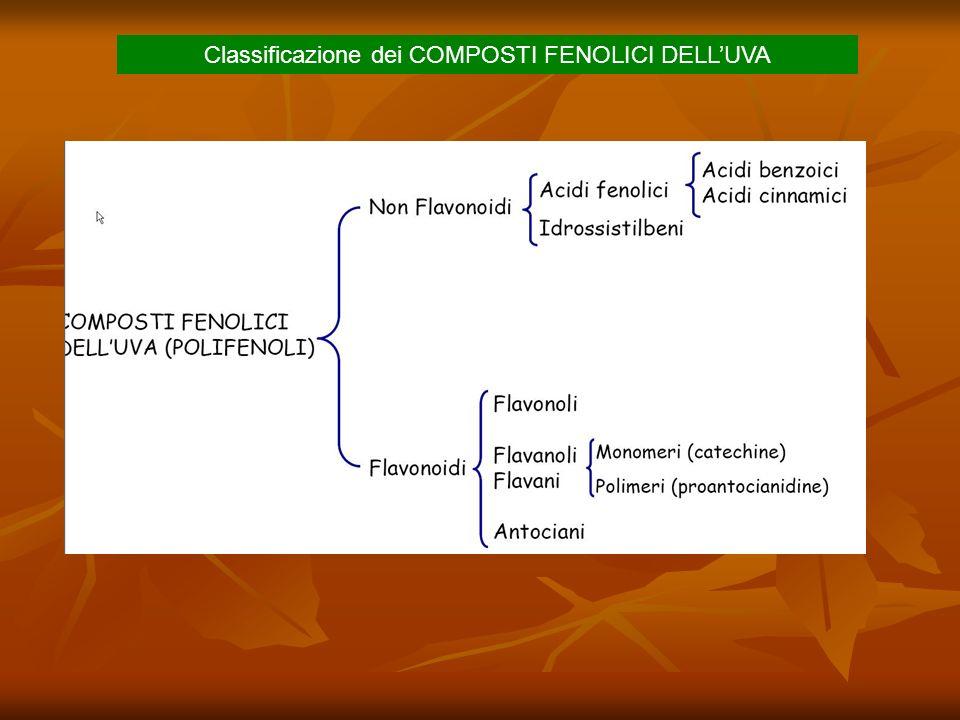 Classificazione dei COMPOSTI FENOLICI DELL'UVA