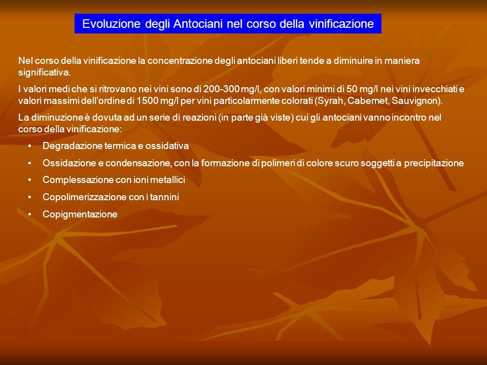 Evoluzione degli Antociani nel corso della vinificazione